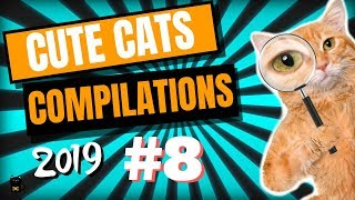 Cute Cats Compilation 2019 – Funny And Cute Cats – Cutest Cats Compilation 2019 #8