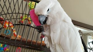 Super Cute Parrots And Funny Birds – The Most Adorable Birds 2018