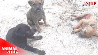 Rescue Two Puppies During They're Watching Their Lifeless Brother
