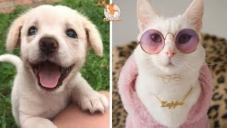 ♥Cute Dogs and Cats Doing Funny Things 2018♥ #108 – CuteVN