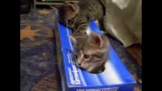 Kitten and his box.