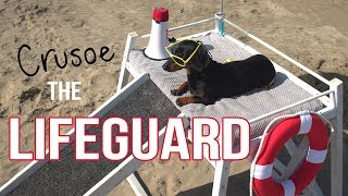 Ep 2: Crusoe the Dachshund Lifeguard – Funny Dog at the Beach!