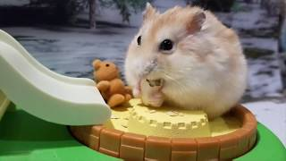 🐹🐸 Baby Tree Frogs & Baby Hamsters Having Fun In A Tiny Park 🐸🐹