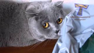 Cute cats feel guilty – Funny guilty cat compilation Tips