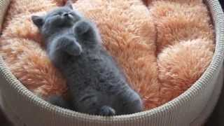 Cute/Funny Kitten/Cats And Puppies/Dogs Compilation 2013 EPIC – 10 Minutes! [HD]