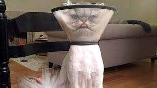 There's absolutely nothing funnier than cats – Funny cat compilation