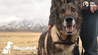Military Dog Is SO Happy To Finally Be Home With His Dad | The Dodo Reunited
