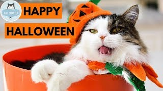 Cute Cats In Halloween Costumes Compilation 2018
