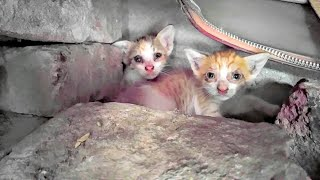 2 abandoned kittens hide under a old briefcase