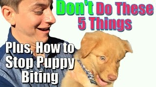 How to Stop Puppy Biting and Don't Do These 5 Things When Training Your Puppy
