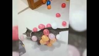 Funniest pets 2019 p1 – try not to laugh – Funny animals – Funny dogs – cats