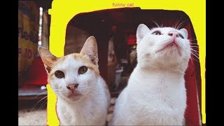 funny Cat Video  Compilation#24 Best Cats Compilation| Most Funny