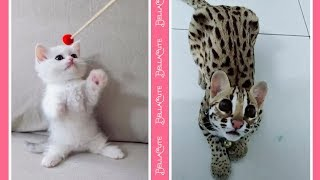 Cute Cats Doing Funny Things Compilation 2018 – Vidéos Drôles De Chats