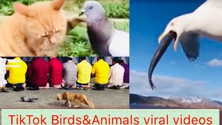 Birds Tiktok videos || Funny Birds Compilation