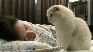 #funnyvideos #animals #funnyanimals #cutecats #cat SOOO CUTE| *MUST WATCH*