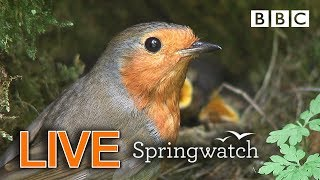 Cute birds and animals streaming cams Day 6 Part 2 🐦🐤🐤🐤 | BBC Springwatch