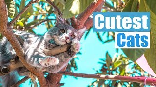 Cutest cat videos 🐱 Funny cats life vedios compilation