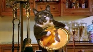 Best Funny cat and kitten – TOP Funny scared cat videos Compilation 2016