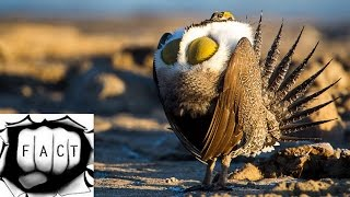 Top 10 Creepy & Funny Looking Birds