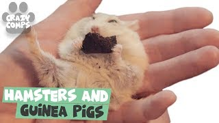 Hamsters and Guinea Pigs are Awesome | Cutest Rodents Ever 😀