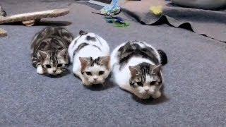Super Cute and Funny CAT and KITTEN Compilation