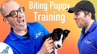 How To Prevent Your Puppy From Biting – Professional Dog Training Tips