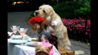 Cute dogs & puppies wearing costumes