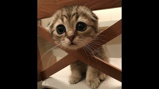 CUTE DOGS AND CATS DOING FUNNY THINGS #2 🐱 🐶