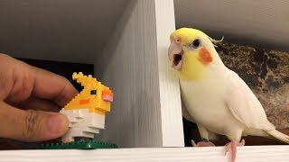 Cute Is Not Enough 🔴 Funny and Cute Parrots Videos Compilation #115