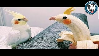 Funniest Parrots Of All Time – Funny Birds Videos Compilation 2018