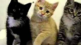 Funny kittens playing with feather – Funny cats