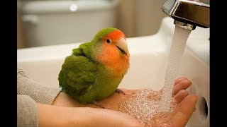 Funny Parrots Videos Compilation cute moment of the animals – Cute Parrots #11