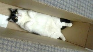 Warning: You will get STOMACH ACHE FROM LAUGHING SO HARD – Funny CAT compilation
