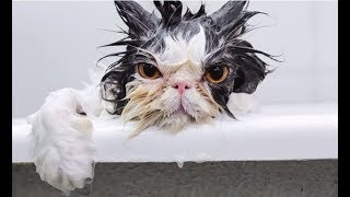CATS HATE WATER! – Funny Cats vs Water Compilation