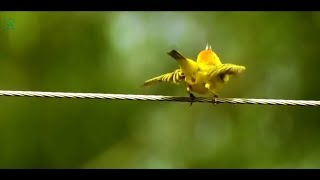 Naughty Birds Doing Extreme Funny Things – Try Not To Laugh – Awesome Compilation