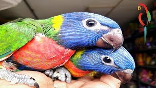 Exclusive Adorable Moment With Cute Tame Birds – Glorious Relations Between Catchy Pets & Owners