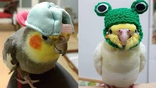 💗Aww – Funny and Cute Parrot Compilation 2019💗 #9 – CuteVN