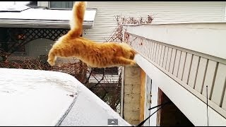 Waffles The Terrible – Funny Cat Fails Epic Jump