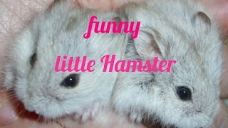 💕2 little funny Hamsters FAIL |New 2018 [edit]💕