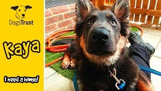 Kaya is the Cutest German Shepherd Puppy! | Dogs Trust Newbury
