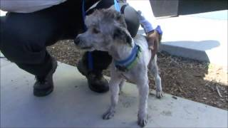 START RESCUE TRANSPORT   CUTE DOGS HEAD NORTH   JAN 31 2013