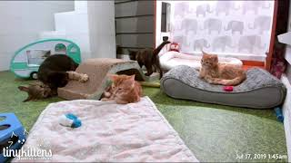 Eternity plays with her kittens and it is ADORABLE!  TinyKittens.com