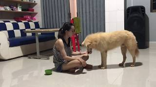 LOVELY SMART GIRL PLAYING BABY CUTE DOGS AT HOME HOW TO PLAY WITH DOG & FEED BABY DOGS #46