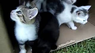 10 Kittens 1st Day Outside – Cute Cats Playing – Adorable