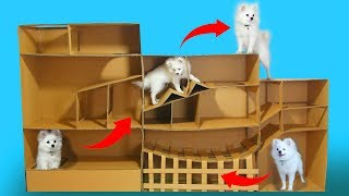 Funny Race Between Snowball Dog And Hugo Hamster- DIY Pet Toys