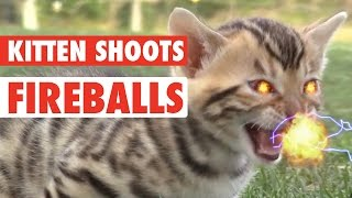 Kitten Shoots Fireballs – Epic!