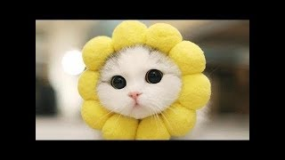 Talking Kitty Cat – Best Funny , Cute Cats And Animals In The World #128