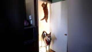 FUNNY DOGS are here to MAKE YOU LAUGH – Funny ANIMAL compilation