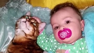 Confused Cat showing love to Baby – Cute Cats and Babies Cuddling Compilation