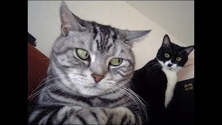 Guilty Cats  – Funny cat feeling guilty for trouble Compilation